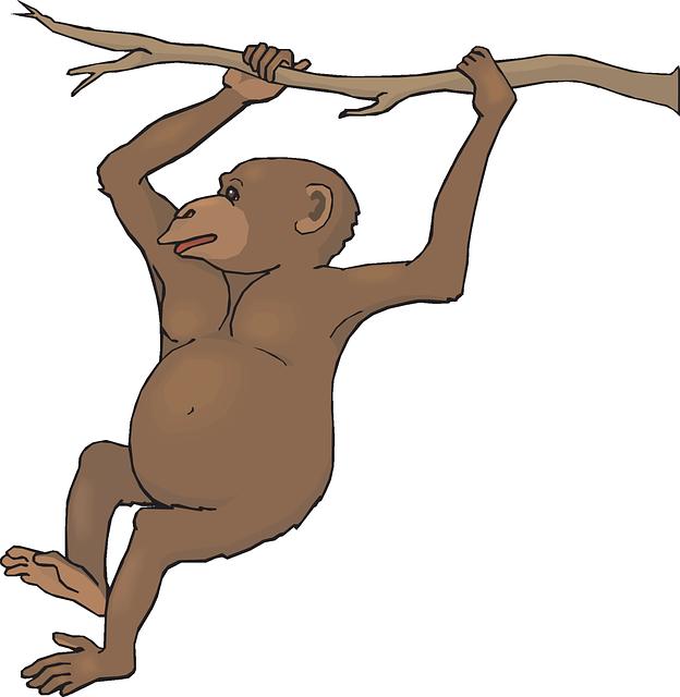 624x640 Zoo Monkey Clipart Amp Zoo Monkey Clip Art Images