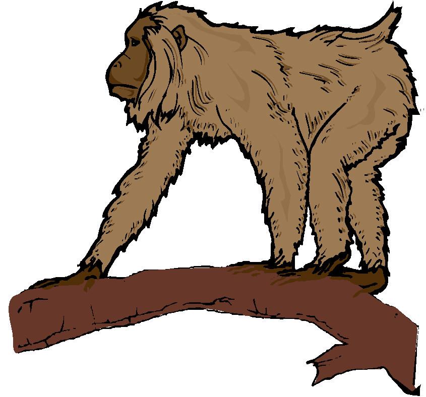 845x788 Monkeys Clip Art Farm