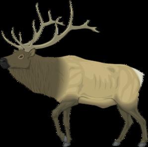 298x297 Large Moose Clip Art