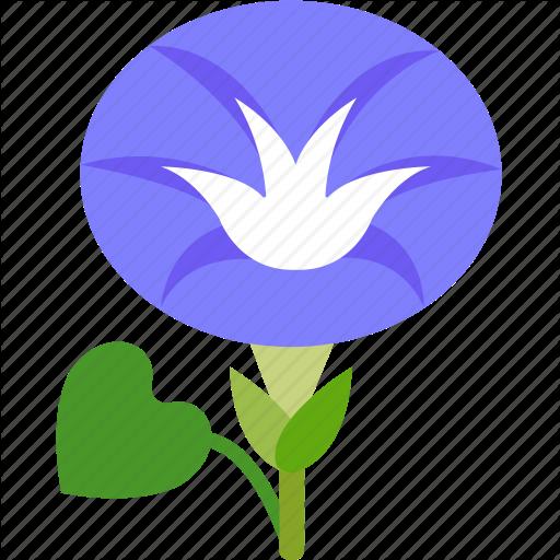 512x512 Morning Glory Clipart Garden Flower