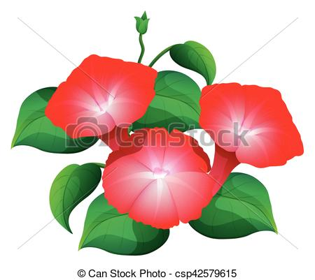 450x401 Morning Glory Flower In Red Color Illustration Vector Clip Art