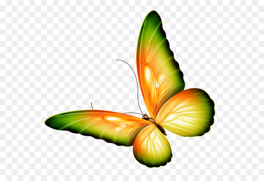 900x620 Butterfly Clip Art