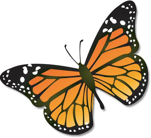 587x539 Butterfly Clipart Line Art