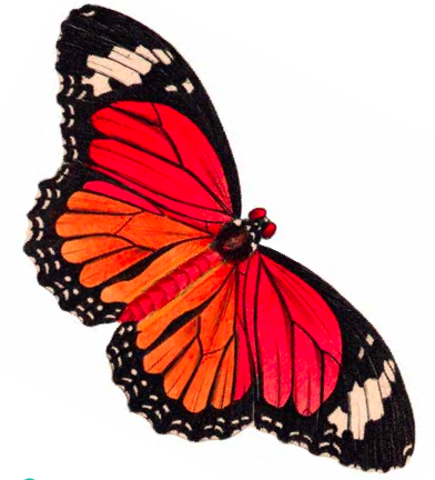 392x432 Free Printables Butterfly Clip Art She's Crafty