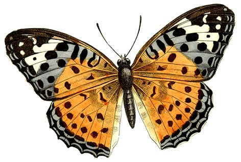 472x317 Huge Butterfly Clipart By Hauntingvisionsstock