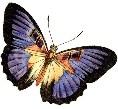 400x367 Purple Butterfly Clipart By Hauntingvisionsstock