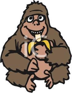 233x300 Royalty Free Clipart Image A Gorilla Eating A Banana