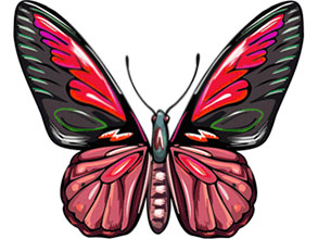 293x220 Animated Butterfly Clipart Free