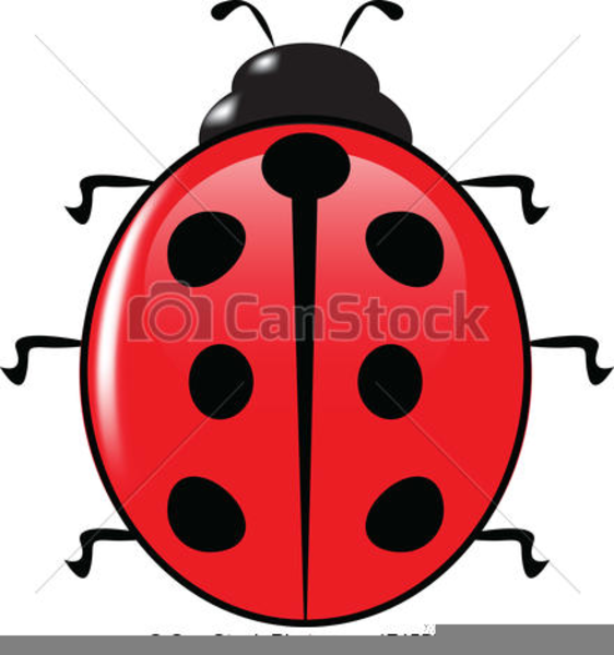 562x600 Free Clipart Ladybird Free Images