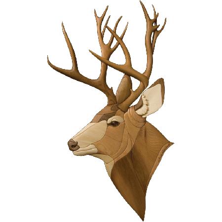450x450 I 278 Mule Deer.png Elephant Mule Deer