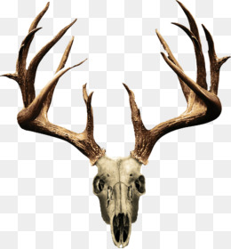260x280 White Tailed Deer Mule Deer Clip Art