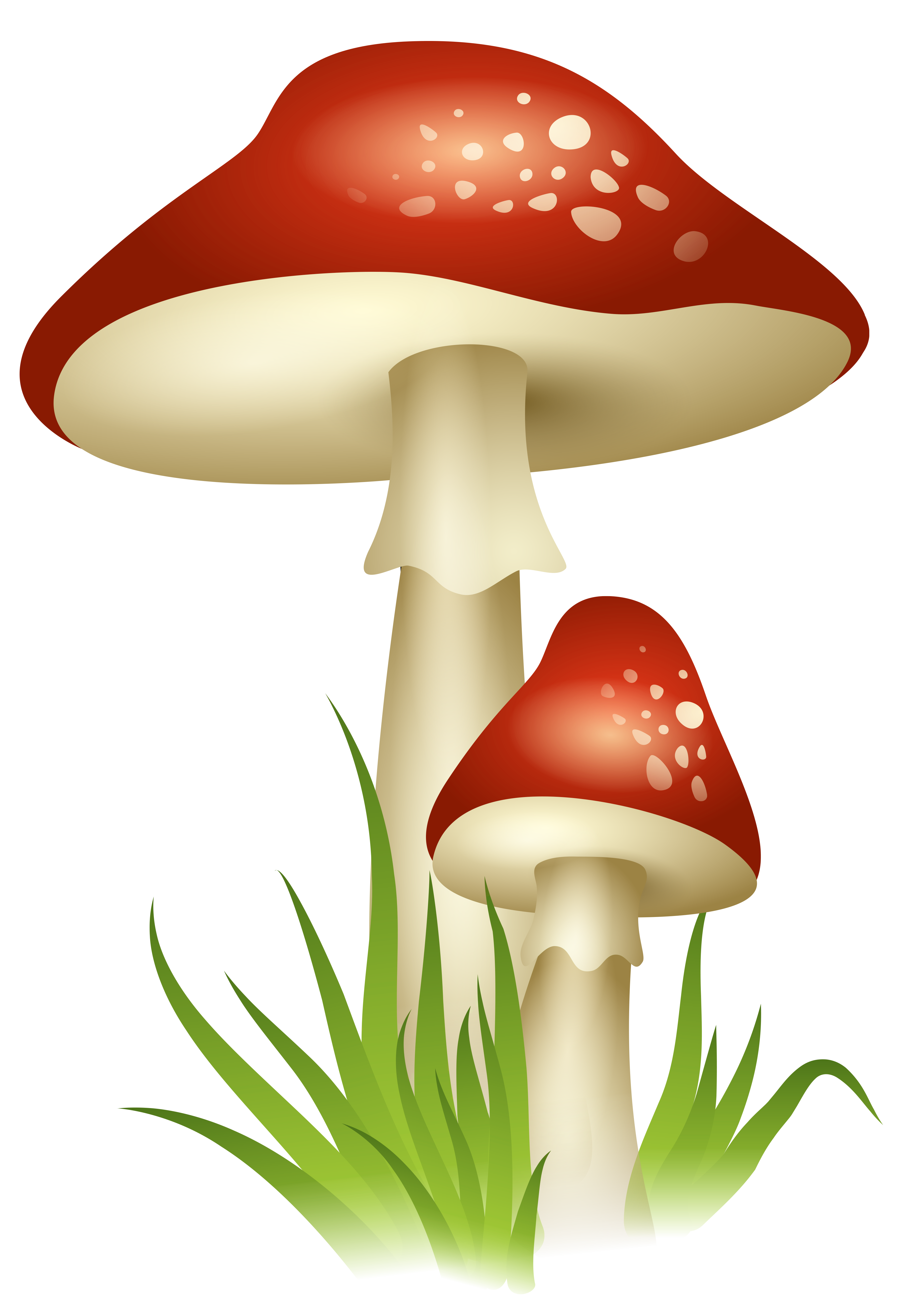 3599x5234 Mushrooms Transparent Png Pictureu200b Gallery Yopriceville