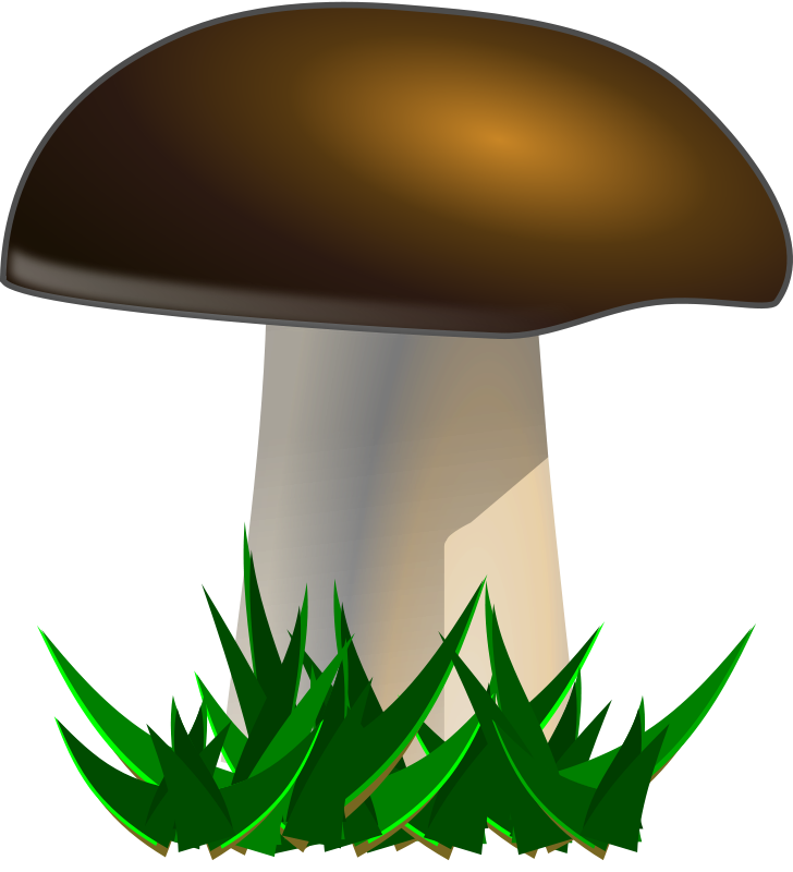 728x800 Mushroom Clipart Collection