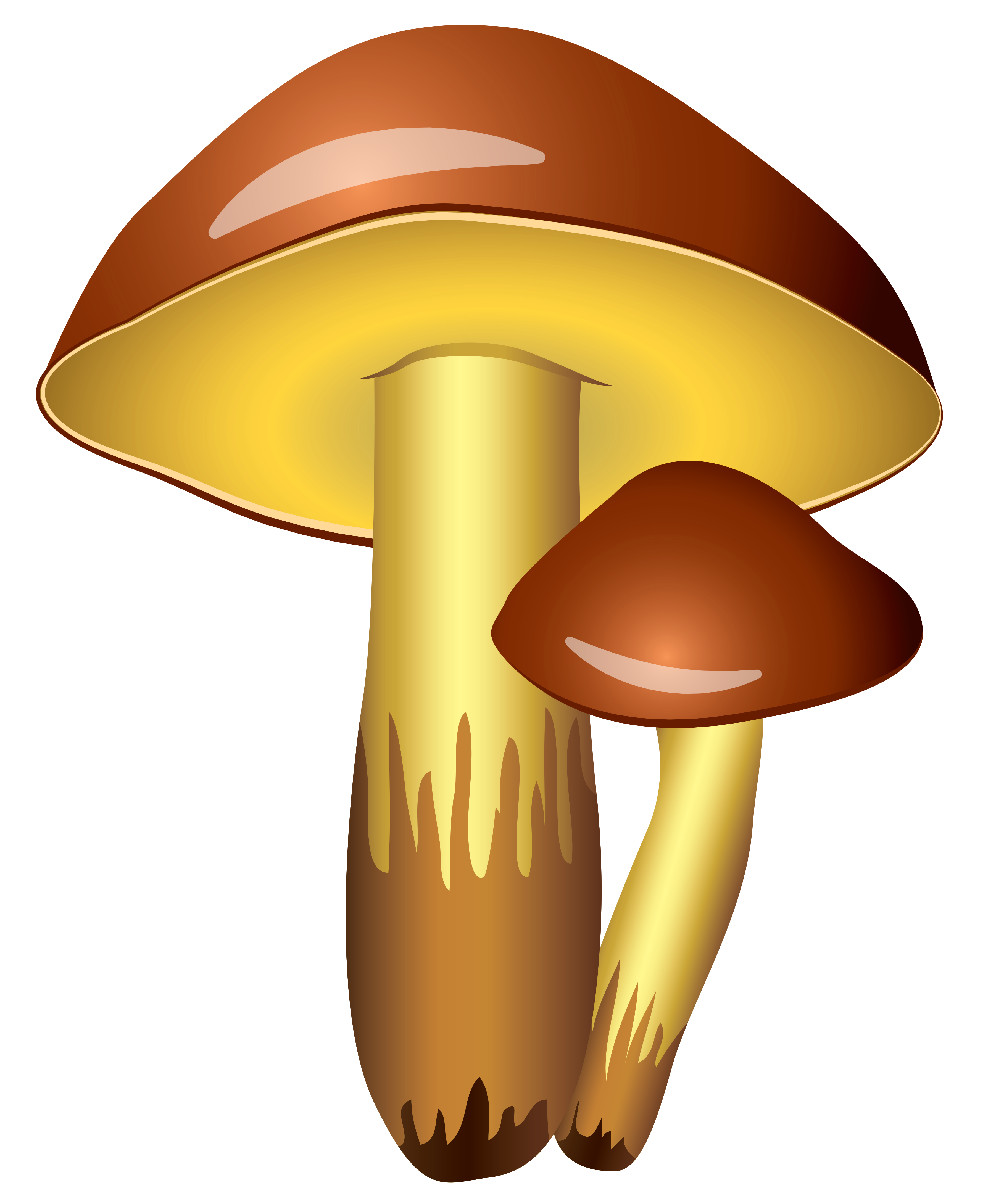 3635x4360 Mushrooms Transparent Png Clipart Pictureu200b Gallery Yopriceville