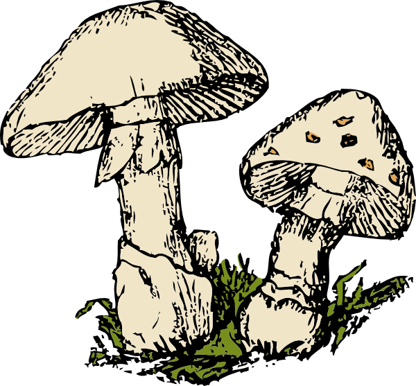 600x557 Two Mushrooms Clip Art Free Vector 4vector