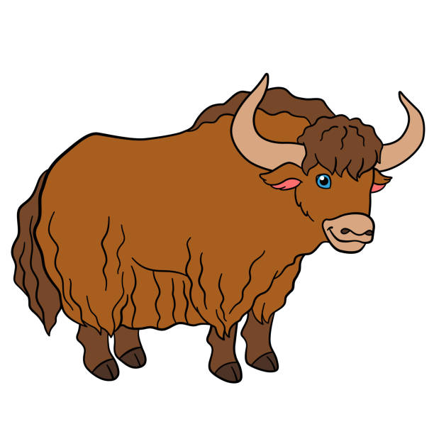 612x612 Collection Of Yak Clipart High Quality, Free Cliparts