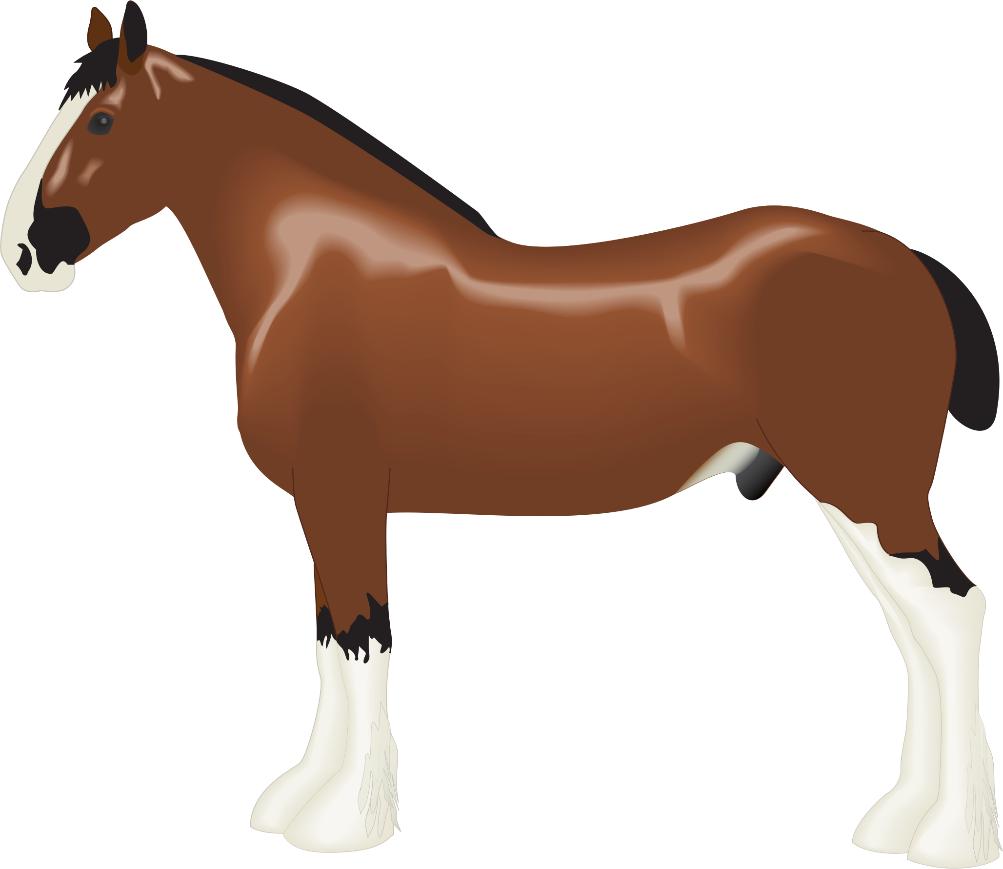 2056x1781 Clydesdale Clipart