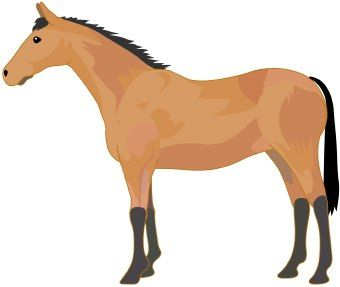 340x287 Fancy Horse Clipart Free Horse