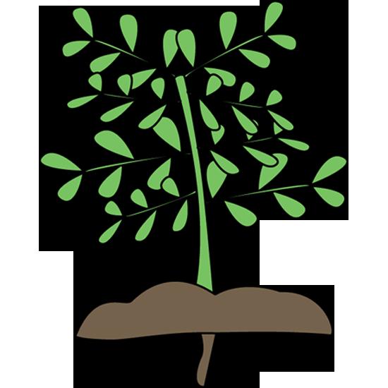 550x550 Plant Clipart Plant With Roots Mockingbird Nursery California