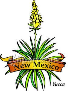 228x300 State Flower Of New Mexico