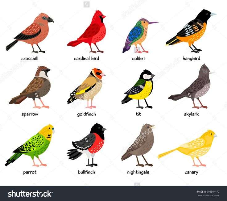 736x651 3139 Best Vogels Images On Bird Art, Colouring Pages