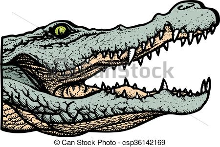 450x302 Green Alligator Head Isolated On The White Background Clip Art