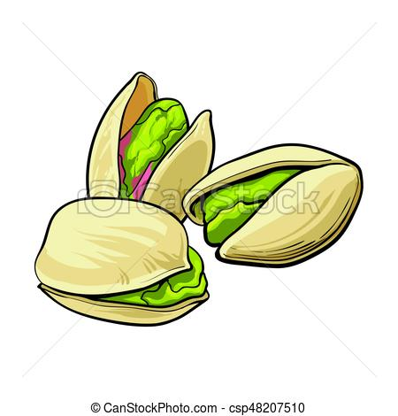 450x470 Group Of Pistachio Nuts, Shelled And Unshelled, Sketch Vector
