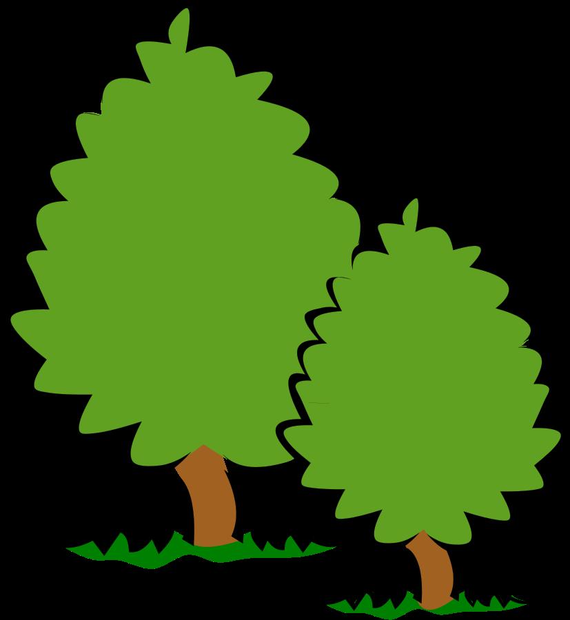 827x900 Oak Tree Clipart ClipArtHut