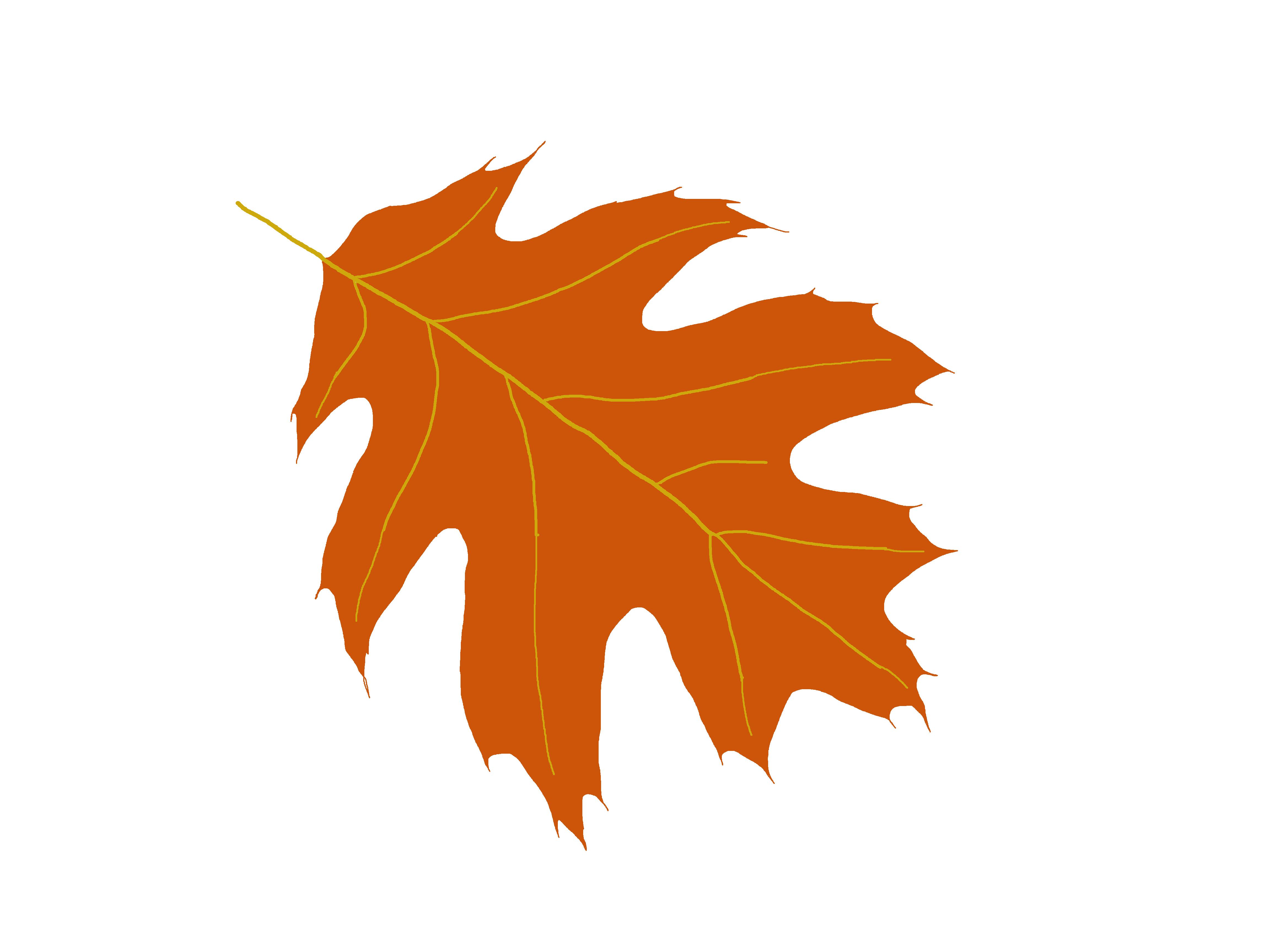 4608x3456 Clip Art Oak Leaf Images Clip Art