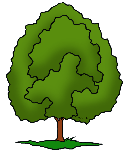 527x648 United States Clip Art By Phillip Martin, Illinois State Tree