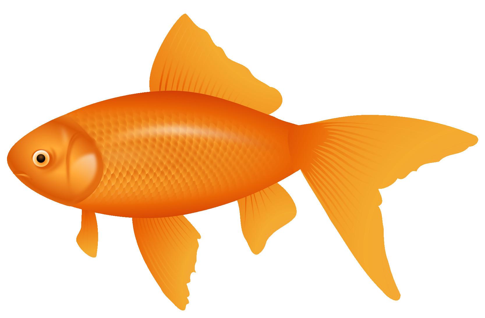 1666x1093 Orange Fish Clipart