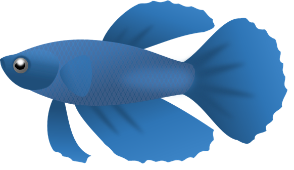 582x336 Blue Fish Png Clipart Png Mart