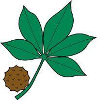 200x206 Buckeye Logo Clip Art Clipart Collection