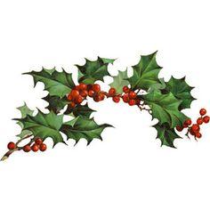 236x236 Holly Berries Clip Art, Christmas Greenery, Holiday Botanical