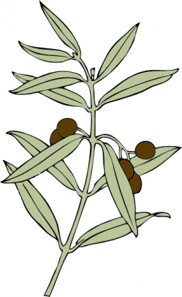 261x425 Olive Branch Clip Art Clipart Panda