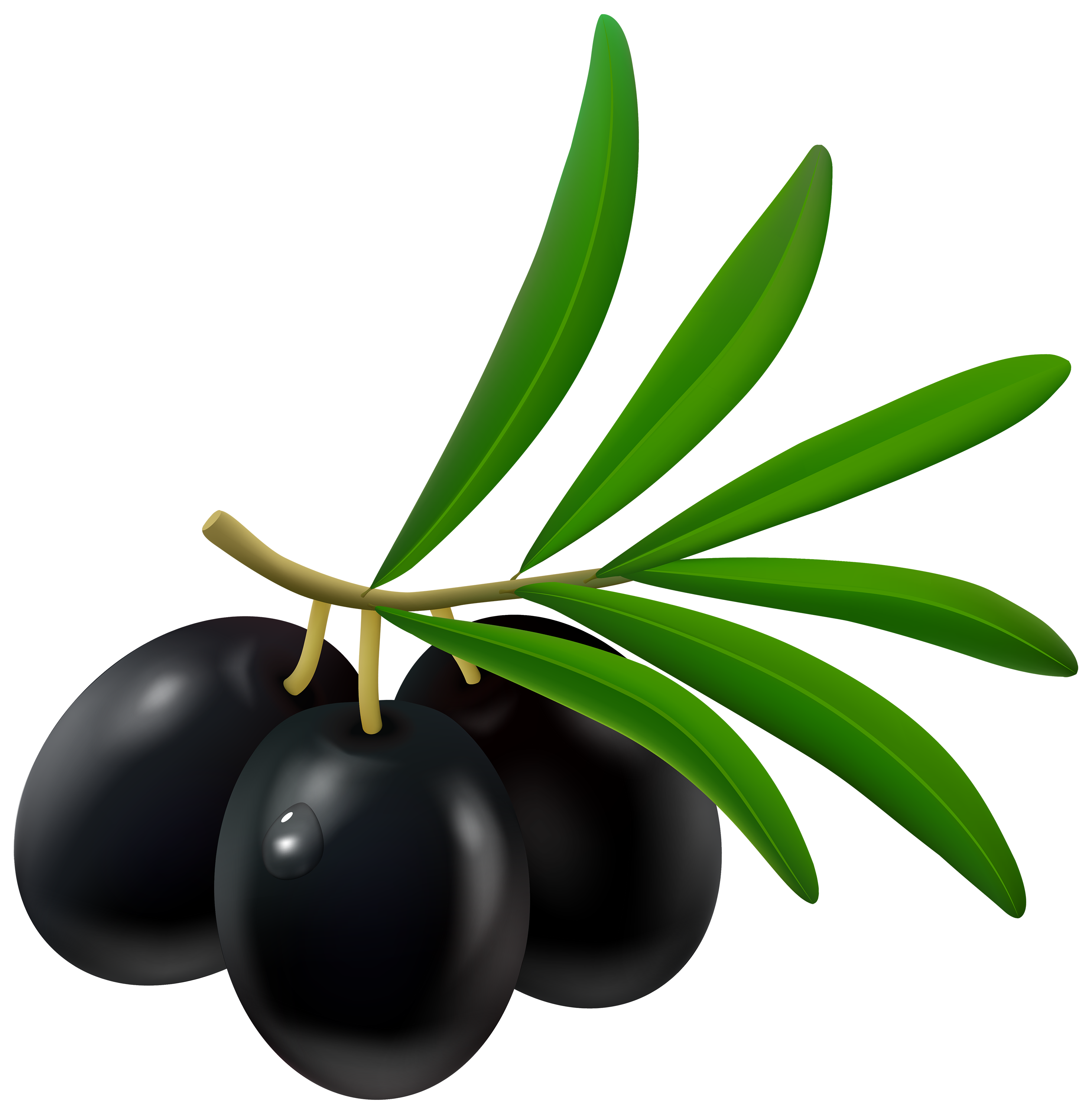 2940x3000 Olive Clipart Amp Look At Olive Clip Art Images