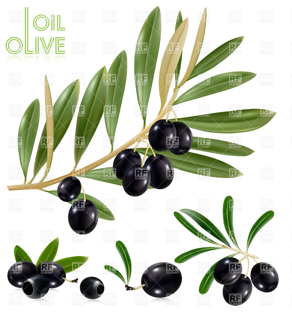 1117x1200 Black Olives Twig With Leaves Royalty Free Vector Clip Art Image