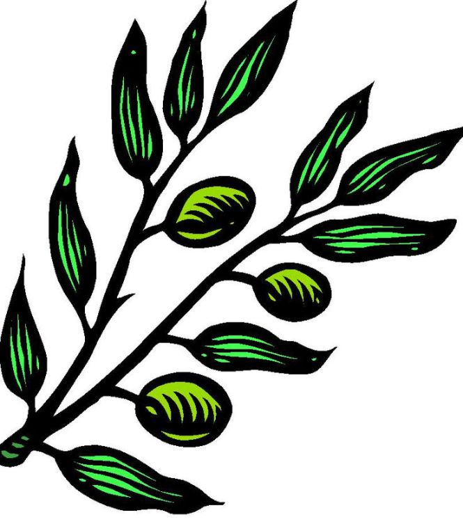 665x753 Clip Art Olive Branch Clipart Collection