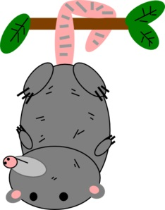 234x298 Free Opossum Clipart