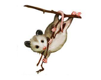 340x270 Opossum Cliparts Free Download Clip Art