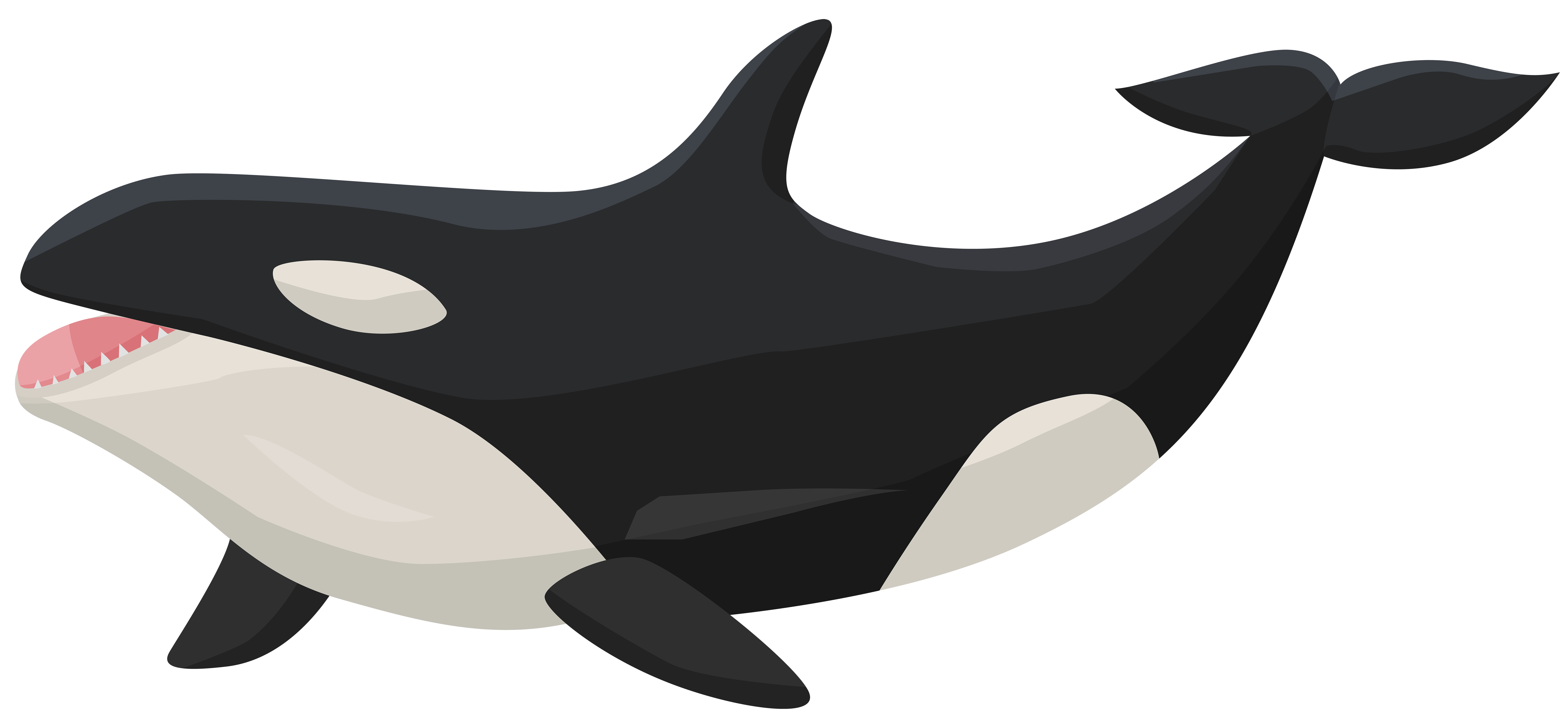 8000x3646 Orca Transparent Png Clip Art Imageu200b Gallery Yopriceville