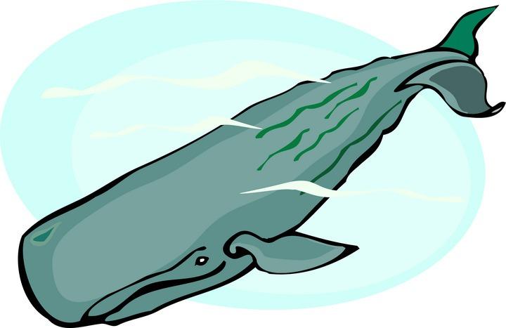 720x467 Killer Whale Clipart Sperm Whale