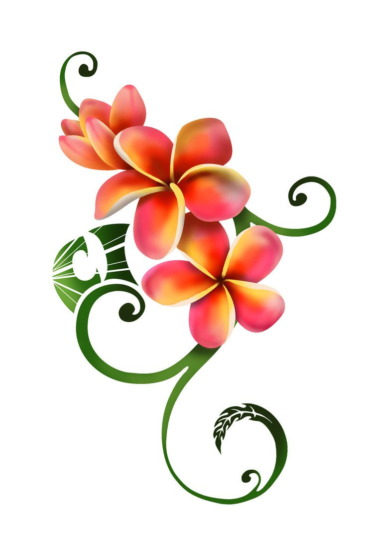 Orchid Flower Clipart