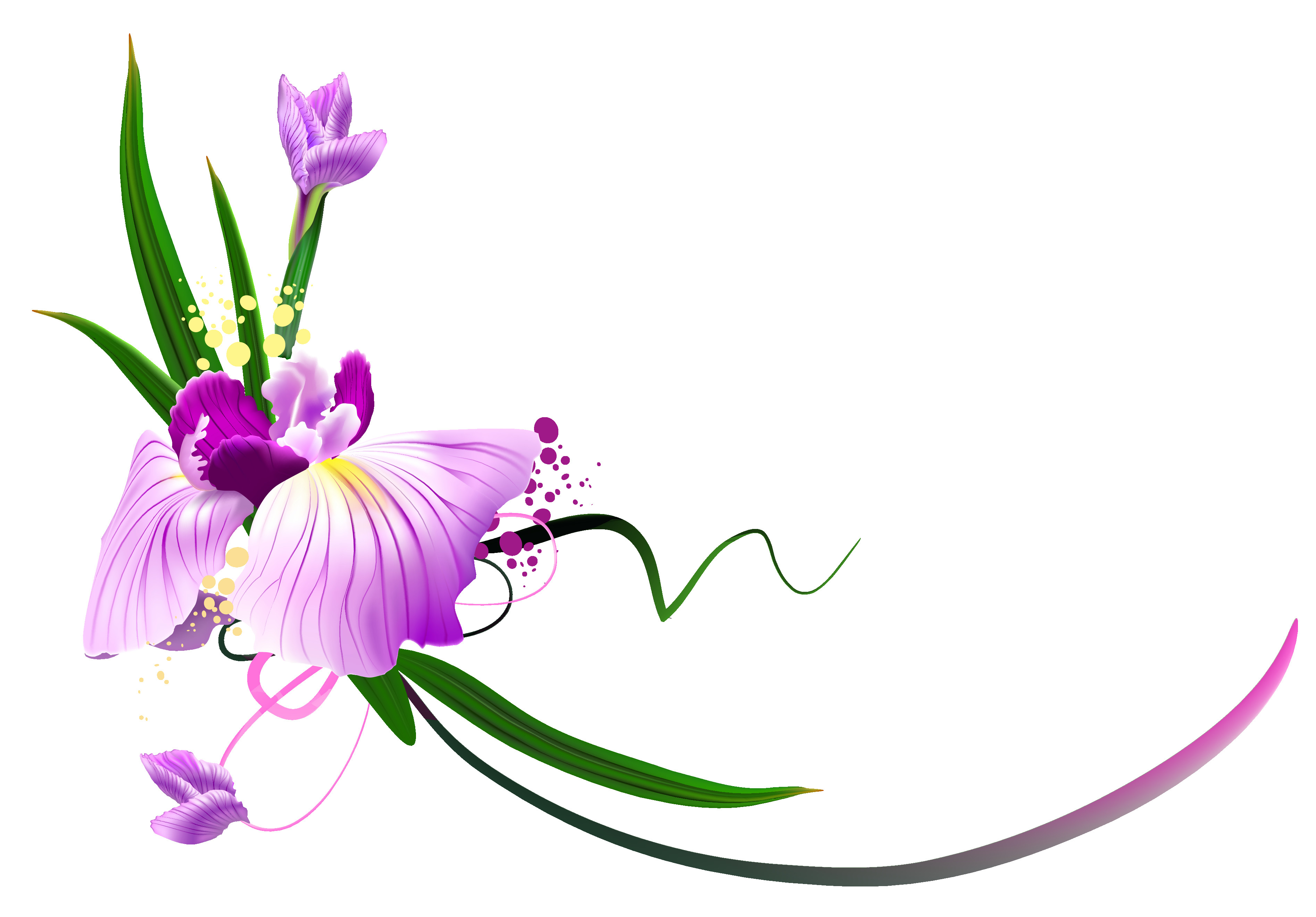 Orchid Flower Clipart at GetDrawings | Free download