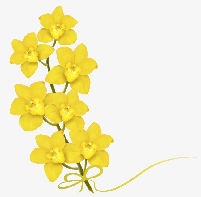 650x637 Yellow Butterfly Orchid, Orchid, Phalaenopsis, Yellow Phalaenopsis