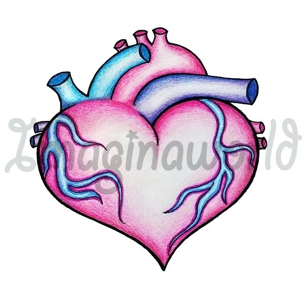 600x600 Anatomical Heart Clip Art Human Heart Anatomy Medical Science