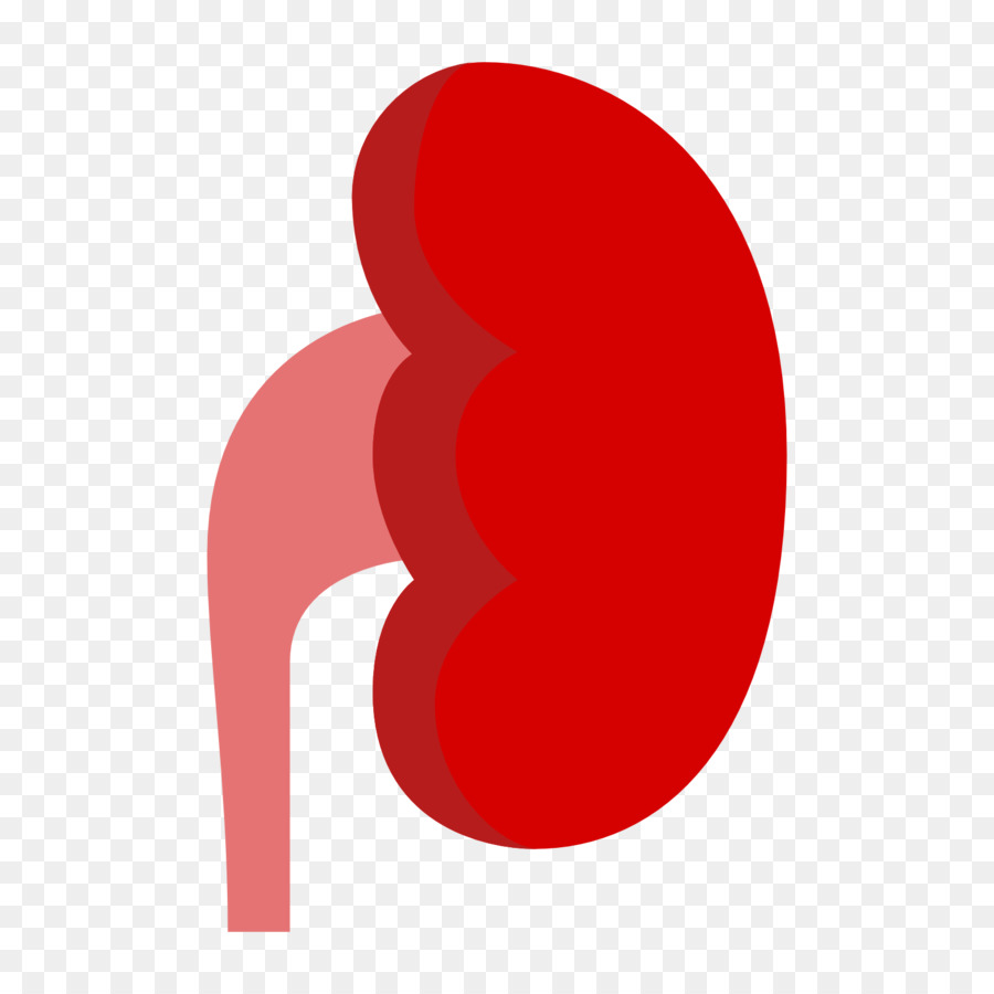 900x900 Chronic Kidney Disease Computer Icons Organ Clip Art