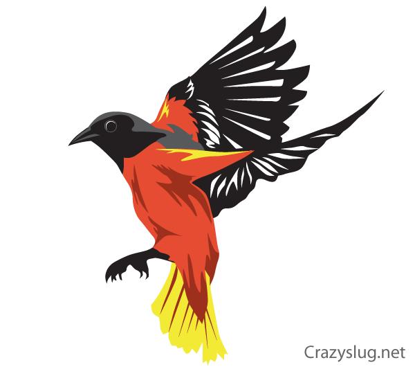 600x530 Oriole Bird Vector Free Oriole Bird, Bird And Free