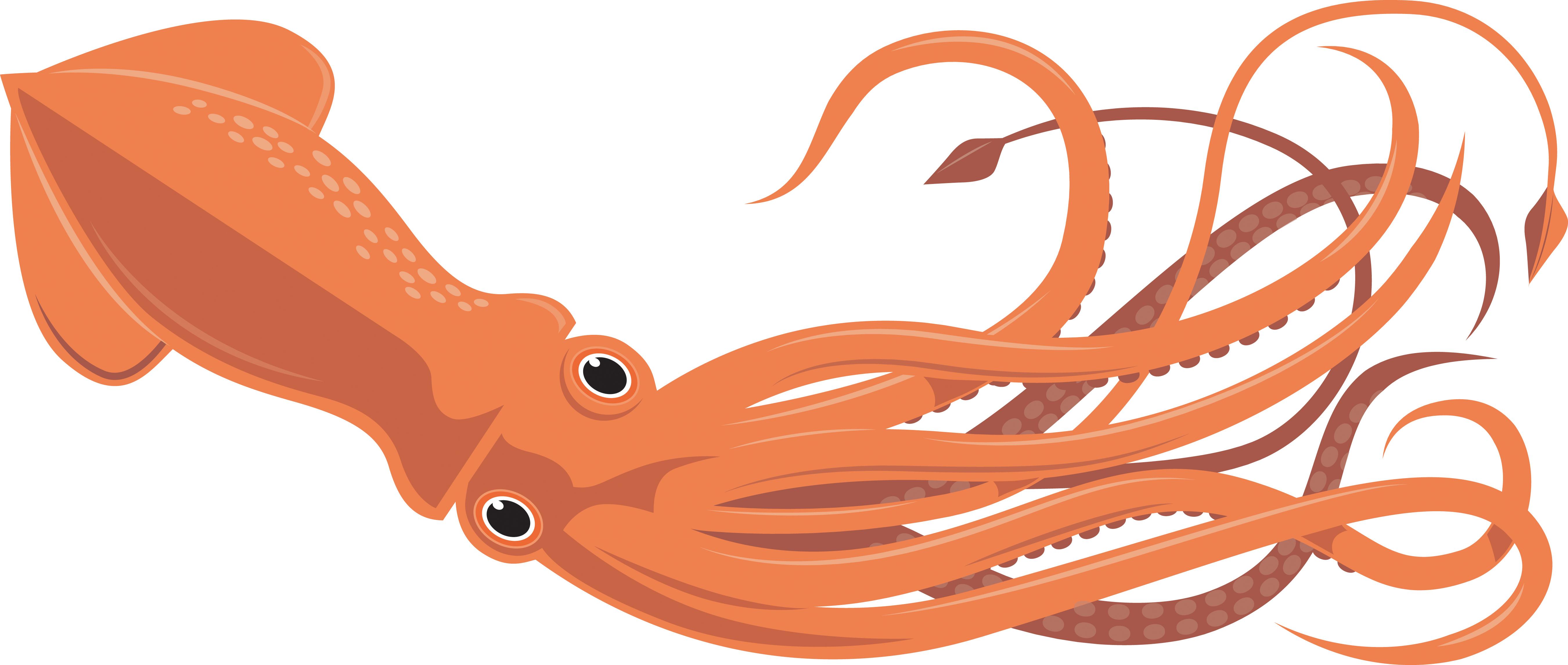 5401x2292 Squid Clipart Free Clip Art