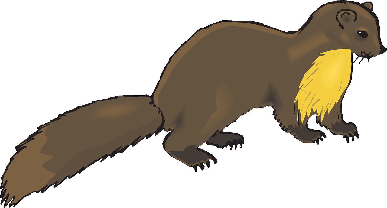 1280x688 European Pine Marten Weasel Otter Mink Clip Art